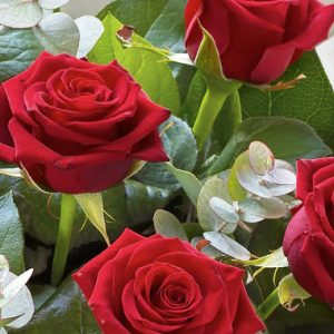 Rose a stelo lungo